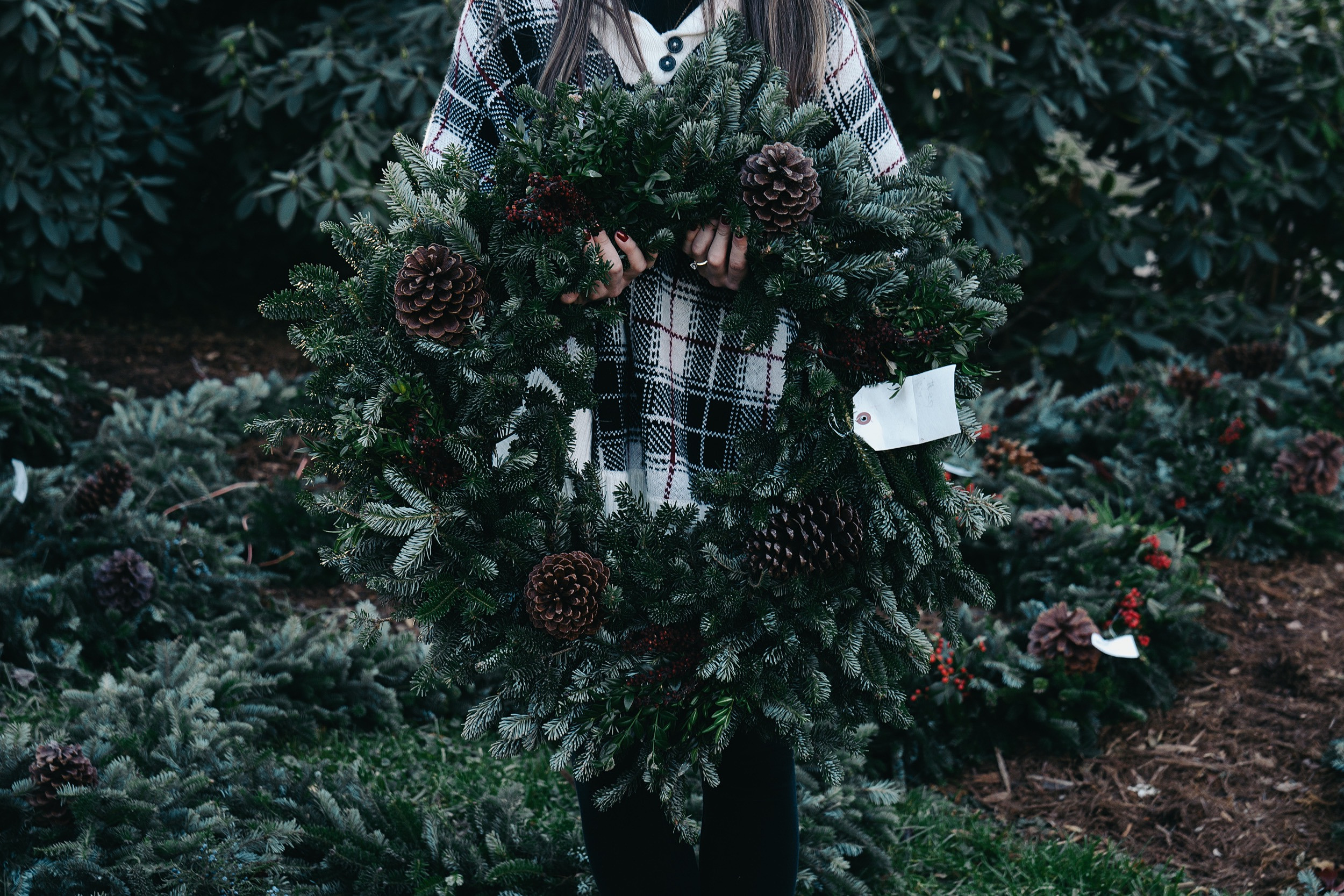 Boyd Mountain Christmas Tree Farm 16