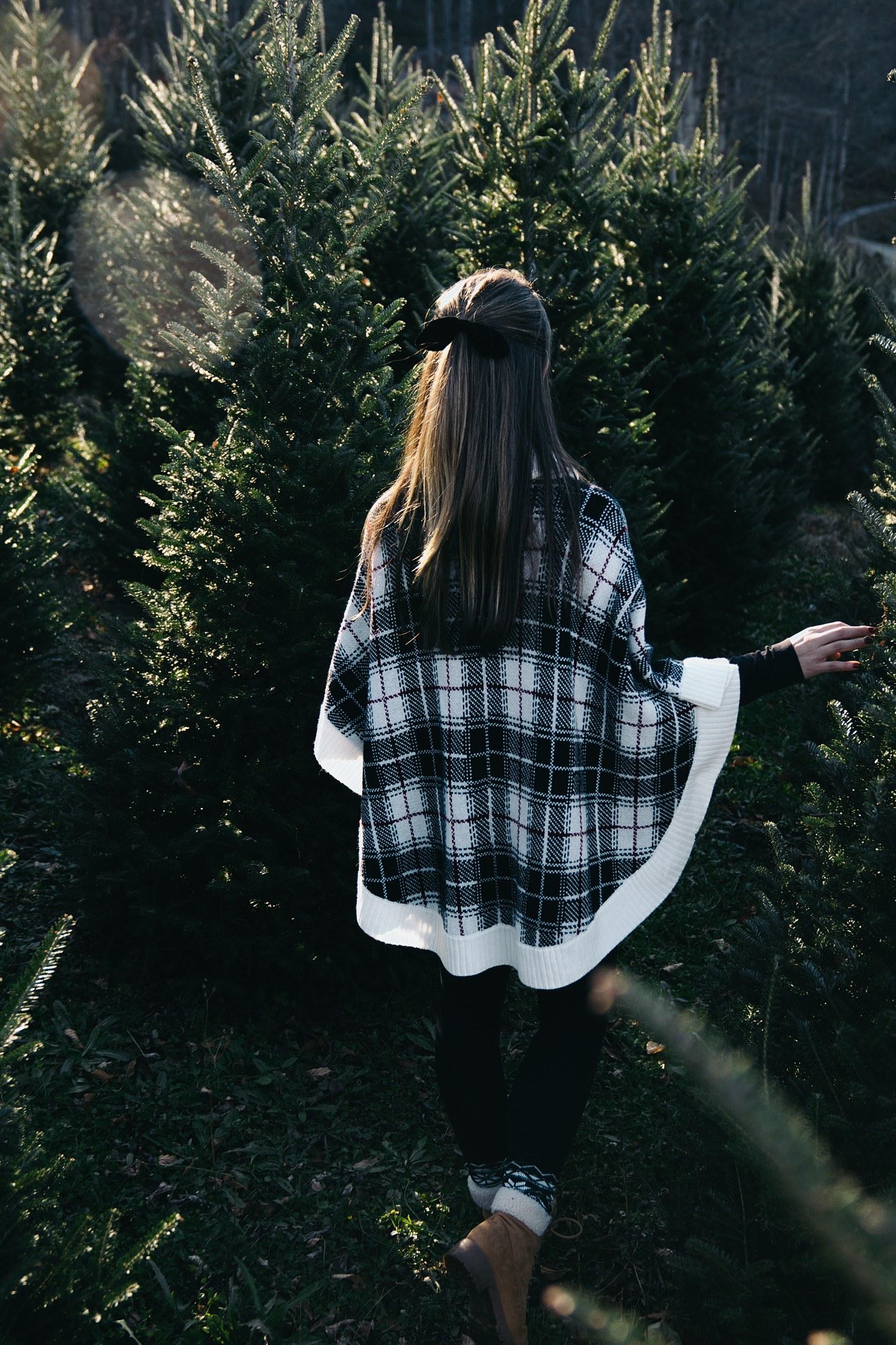 Boyd Mountain Christmas Tree Farm 4