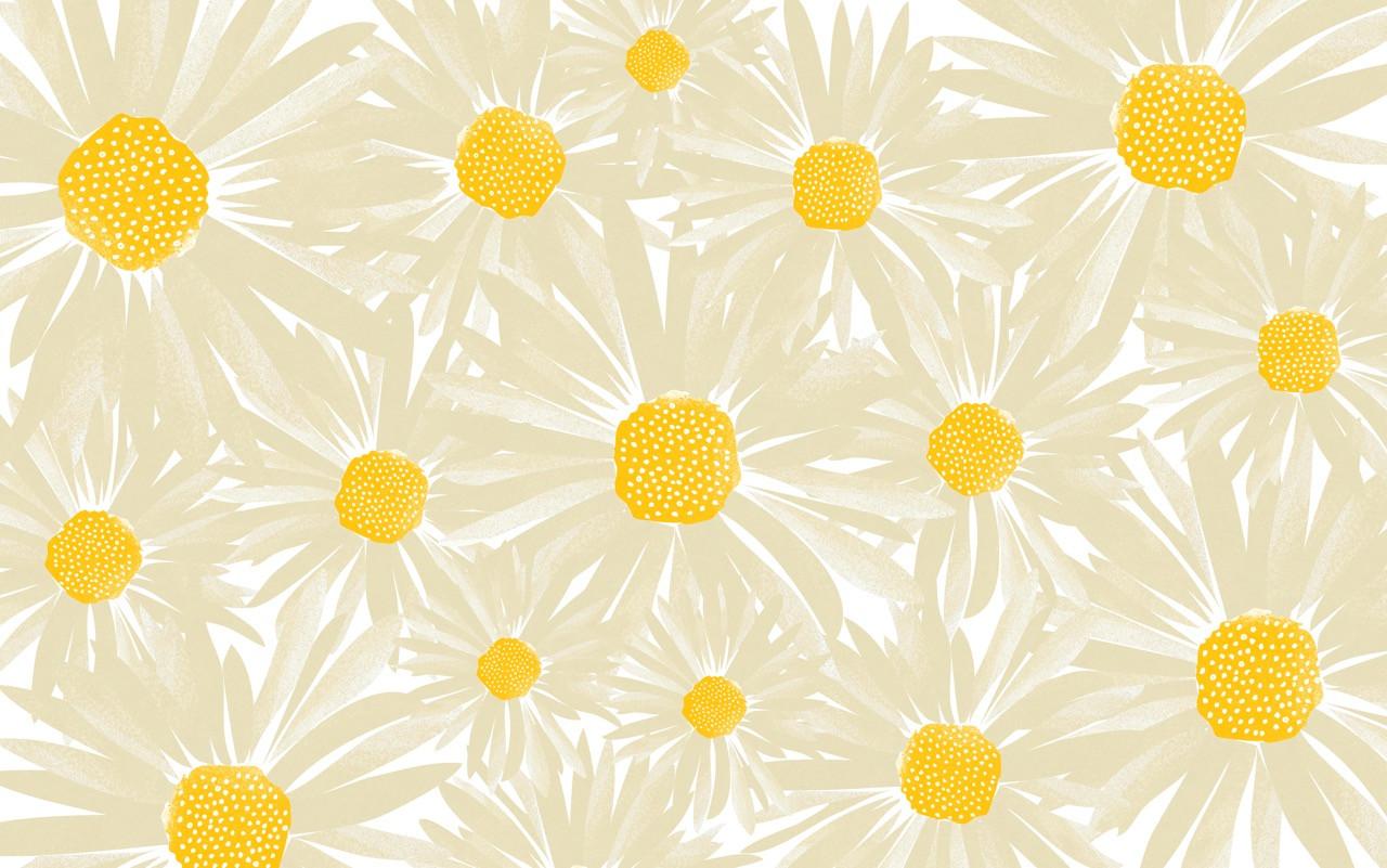 CWILP daisies 01