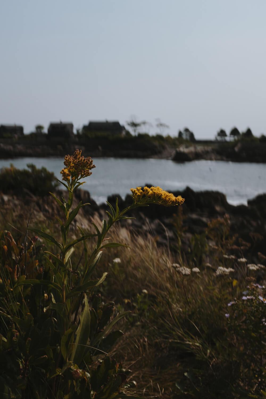 Maine Road Trip 7