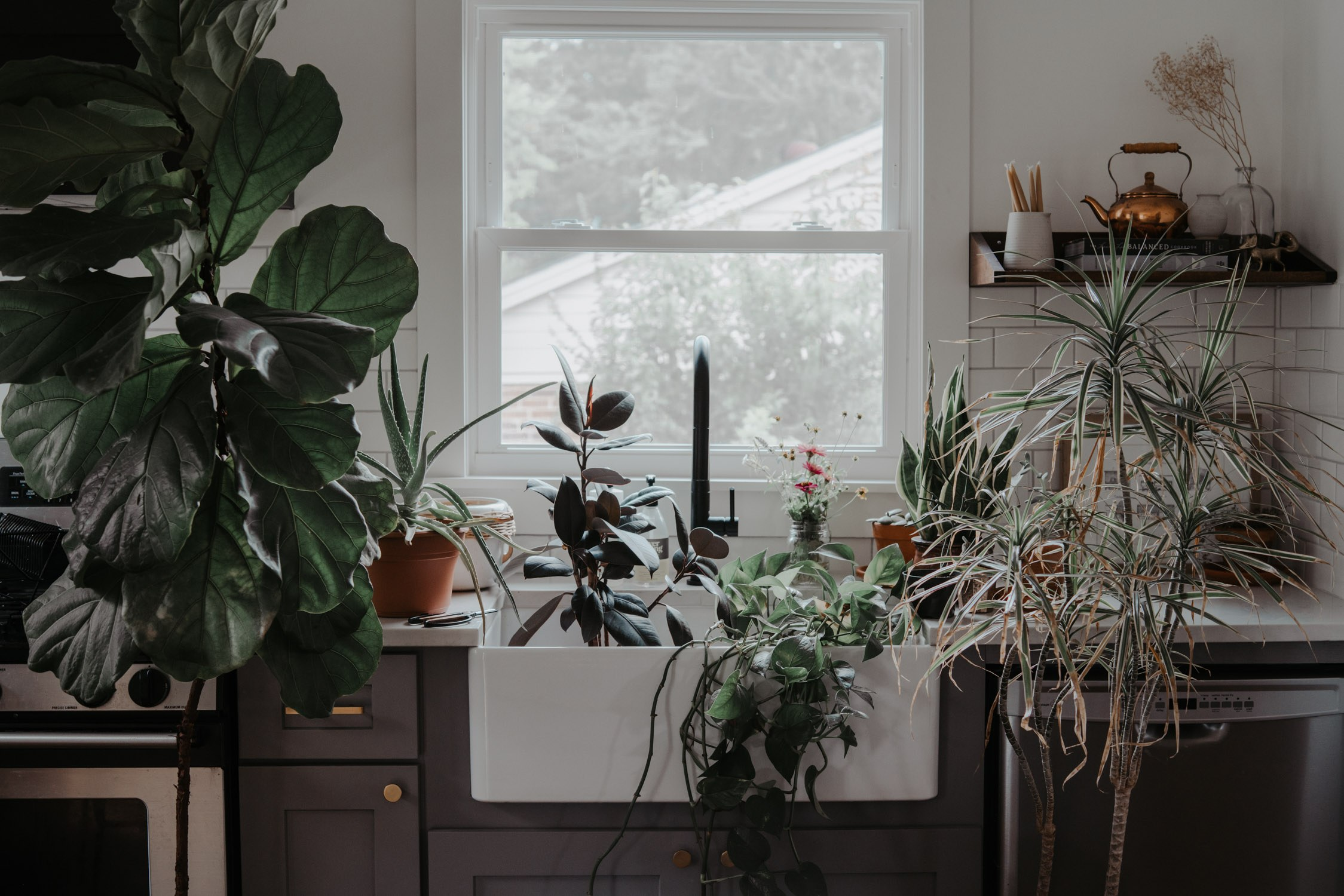 Indoor Plants 1