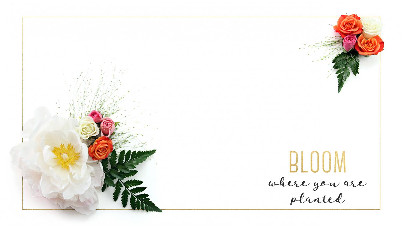 Rose background 3 desktop 1
